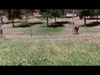 Собачий экстрим